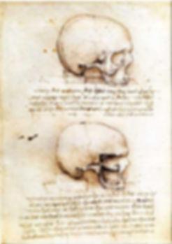 Leonardo da Vinci - Anatomie du crâne