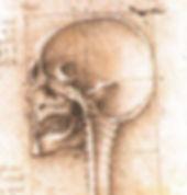 Leonardo da Vinci - Anatomie crânienne