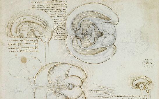 Leonardo da Vinci - Anatomie du cerveau