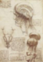 Leonardo da Vinci - Neuroanatomie