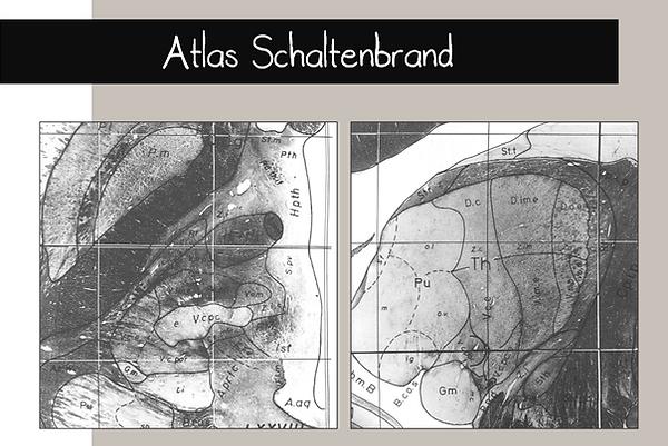 Atlas de Schaltenbrand - Thalamus