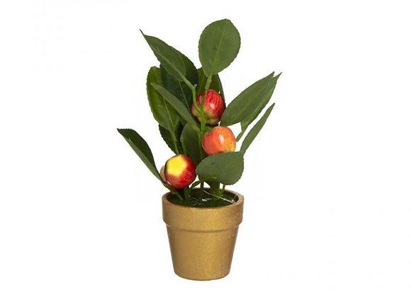 עציץ תפוחים לראש השנה