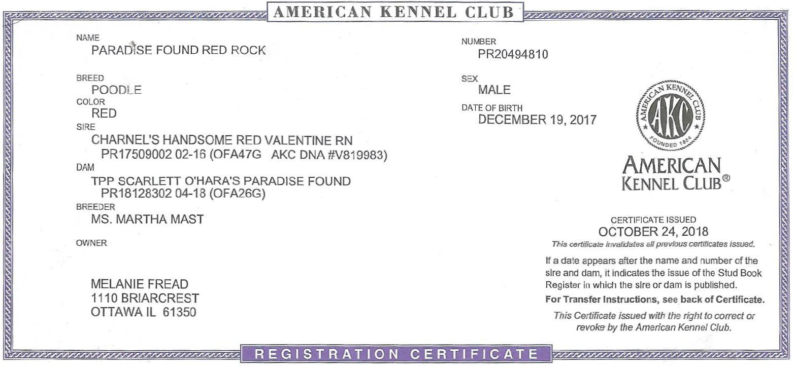 Red Rock AKC Registration