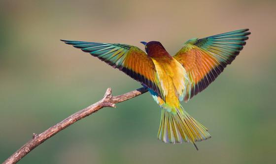 Fly Baby Bird