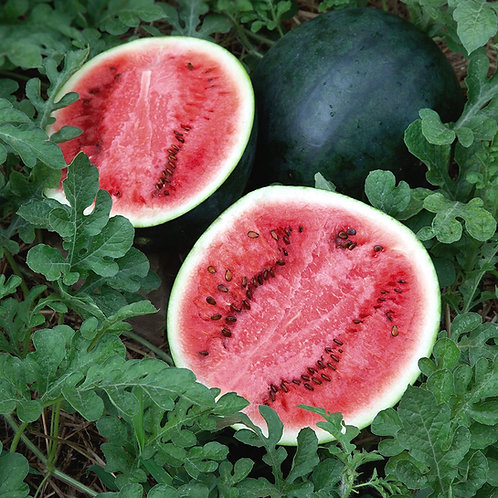 Melon d'eau rouge