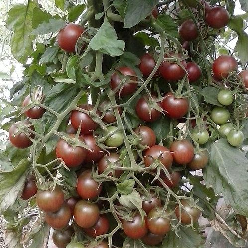 Tomate-cerise «noire»