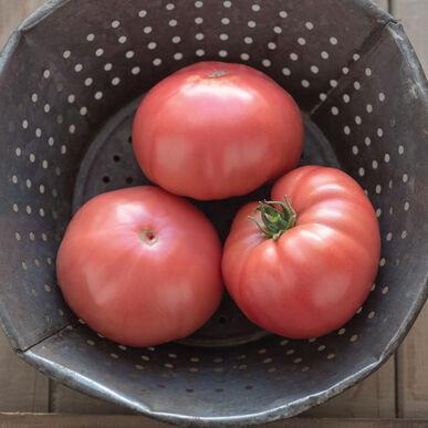 Tomate rose