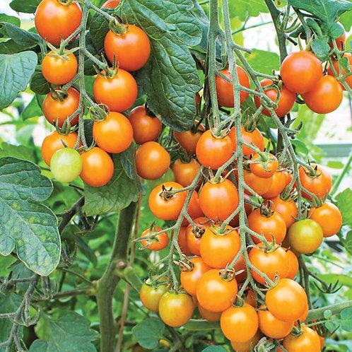 Tomate-cerise orange