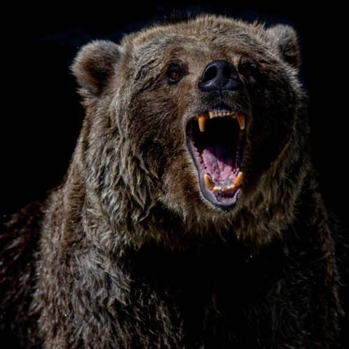 Jewel Bears have made a killing?