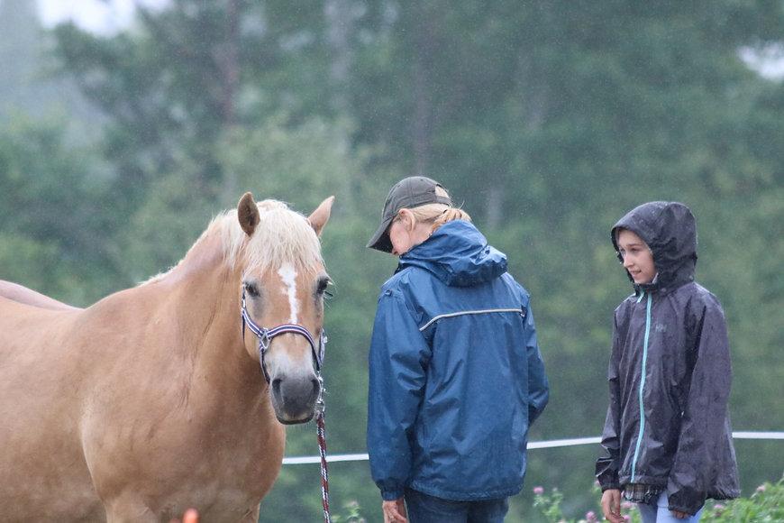 Éducation équine par la science de l'équitation