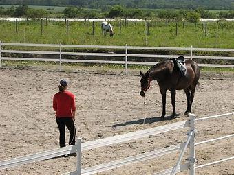 Focus et attention du cheval