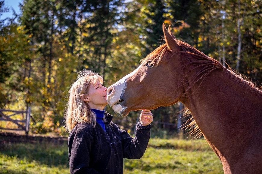 Session en mieux-être facilité par le cheval