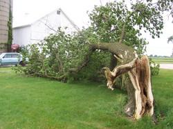 2005 06 June 3 mindy 4 storms 5 mindy trees 10 graduation 036.jpg