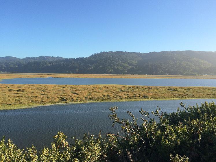 landscape-wetland.giacomini.jpg