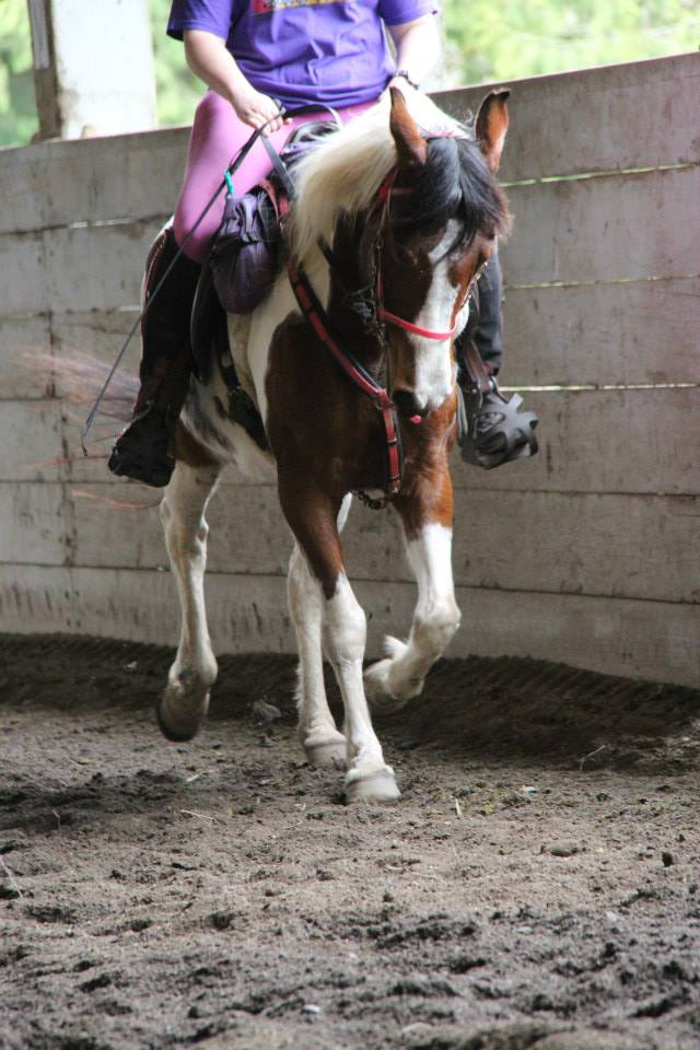 Dressage for endurance riders