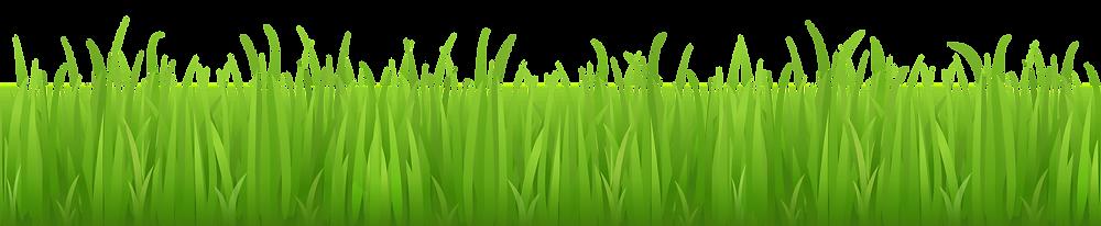 grass_pixelgenio_com_2.png