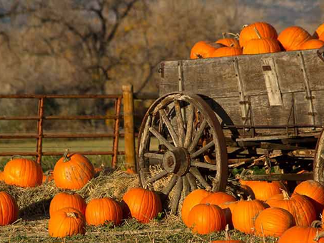 What To Do With All Your Leftover Pumpkins