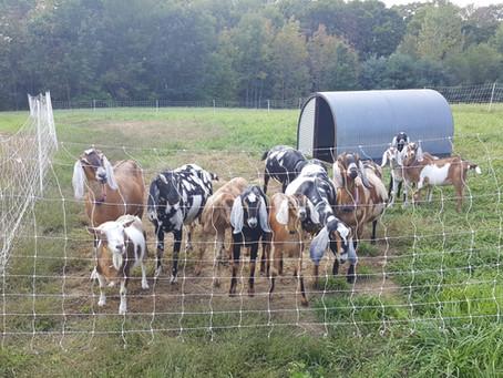 Tri-County has successful goat workshop