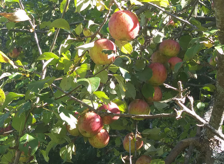 Coos County Apple Tree Presentation