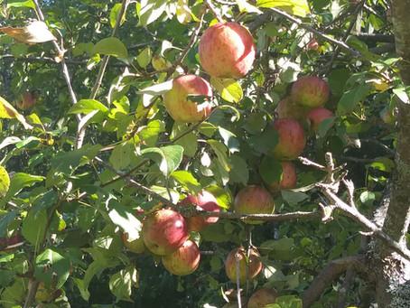 Coos County Apple Tree Presentation