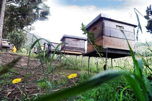 abejas-bioeconomia-22.jpg