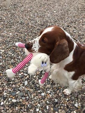 Molli med hendes nye legetøj _).jpg