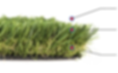 apodis- grass