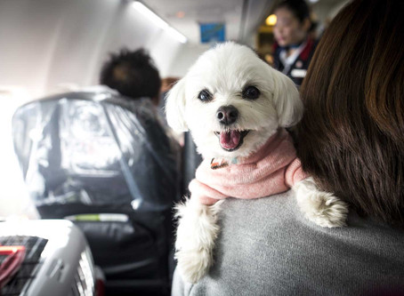 What Should I Look for in a Pet Transport Company?