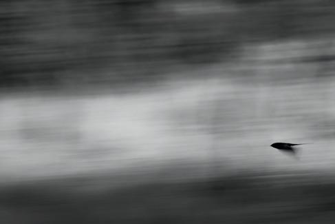 Svale - Ekkodalen