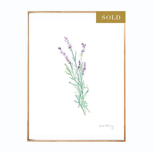 Lavender Original Watercolor