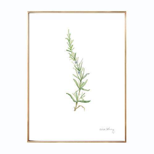 Rosemary  (Giclée quality prints $18-$82)