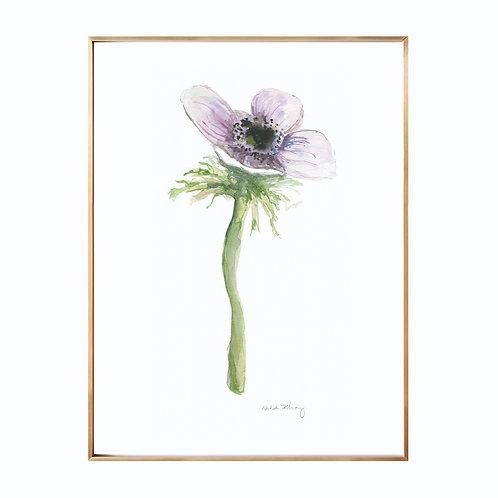 Anemone Original Watercolor