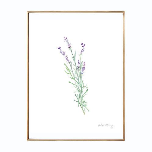 Lavender  (Giclée quality prints $18-$82)