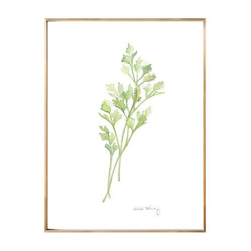 Parsley (Giclée quality prints $18-$82)