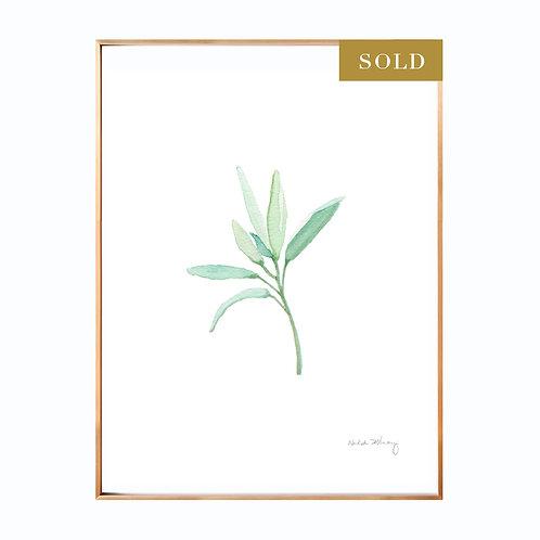 Sage Original Watercolor