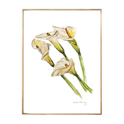 Lillies (Giclée quality prints $18-$82)