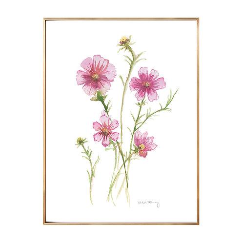 Pink Cosmos  (Giclée quality prints $18-$82)