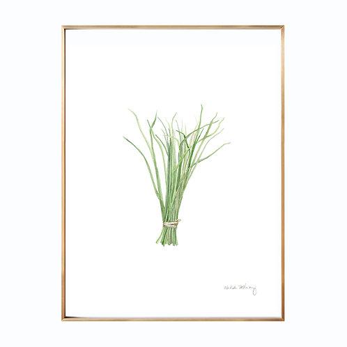 Chives  (Giclée quality prints $18-$82)