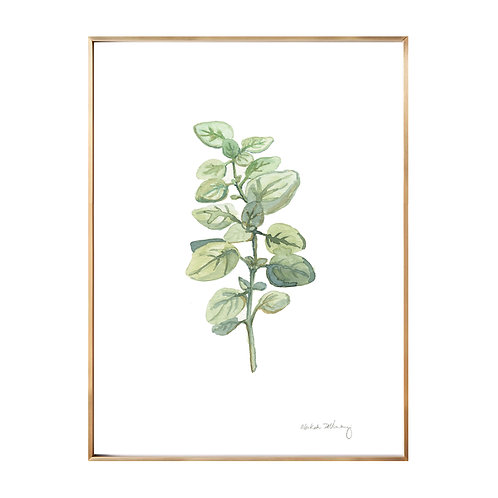 Oregano (Giclée quality prints $18-$82)