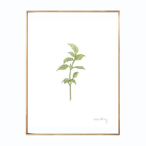 Basil (Giclée quality prints $18-$82)