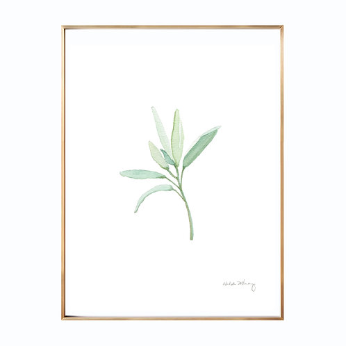 Sage  (Giclée quality prints $18-$82)