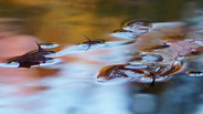 Leaves and flowing water.JPG