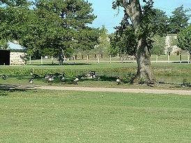 Park_with_geese1a.JPG