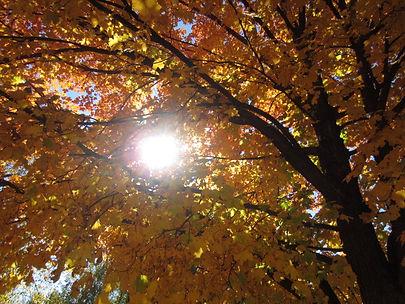Autumn Rays_1.JPG