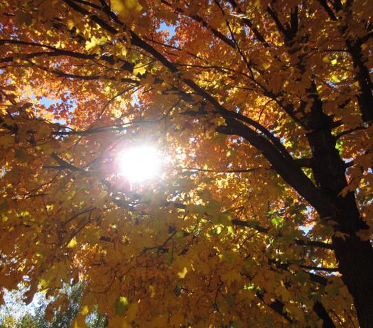 Autumn Rays