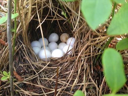 1st-2017-nest-at-PI-phil-Coppola-958x719