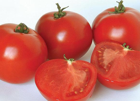 Tomate moyenne rouge
