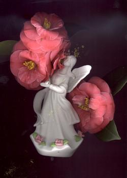 Camellia Angel