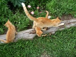 cat 119