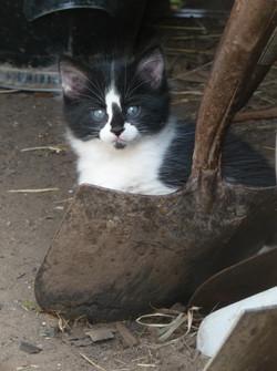 kitty shovel